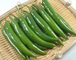 Korean Pepper